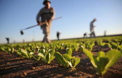 Covid-19, il Governo contro l'agricoltura